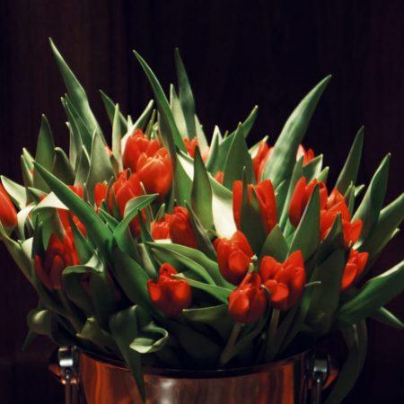 Tulipani iz MD